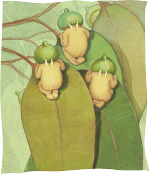 Gumnut babies hiding in the leaves