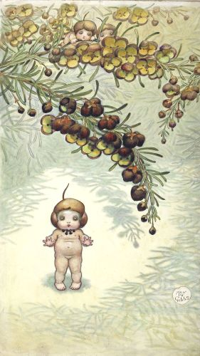 Boronia Babies original cover art