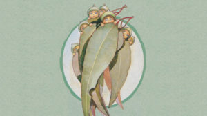 gumnut babies hiding behind gum leaves