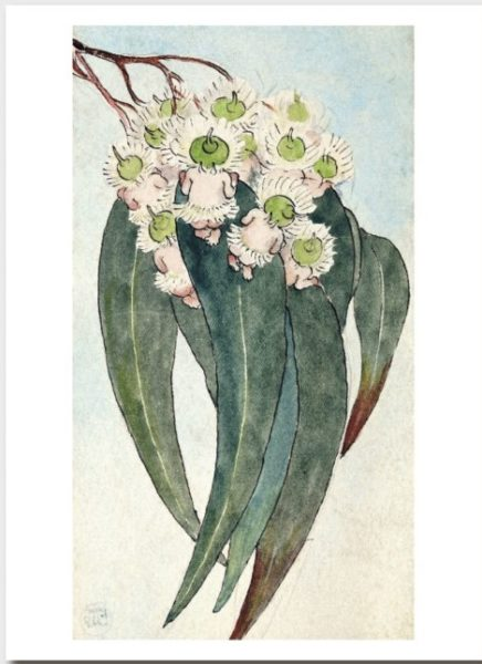 May Gibbs Gift Card Gum Blossom Babies Frontispiece