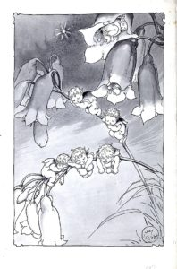 Flannel Flower and Other Bush Babies 'Asleep'
